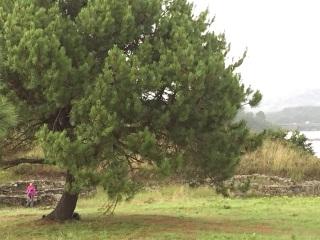 Hispania, Neixon celtic hill-fort   by E.V.Pita (2015)  http://archeopolis.blogspot.com/2015/09/hispania-nexion-celtic-hill-fort-castro.html  Castro de Neixón (Boiro)  por E.V.Pita (2015)